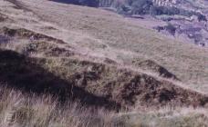 Ferndale, Rhondda: Landscape & Plant/tree