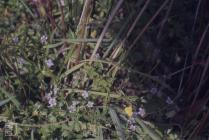 Llwynypia: Plant/tree