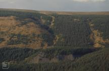 Blaen Gwynfi: Plant/tree & Landscape