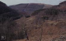 Cwm Wern Deri: Landscape