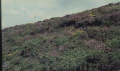 Manmoel: Plant/tree & Landscape