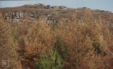 Pen Pych: Plant/tree & Landscape