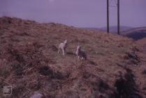 Maesteg: mammal & Landscape