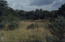 Bryn-y-Garn, Pencoed: Invertebrate & Landscape