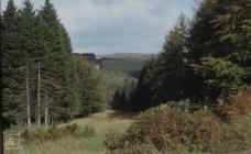 St Gwynnos Forest: Plant/tree & Landscape