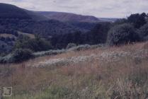 Penrhys: Landscape