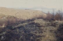 Blaen Clydach: Plant/tree & Industry