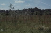 Forest Farm, Cardiff: Plant/tree & Poplar