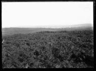 Capel Gwladys