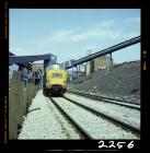 Locomotif yng Nglofa Oakdale 1981