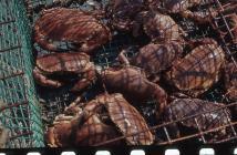 Crab catch