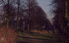 Llandaff, Cardiff: Landscape & Plant/tree