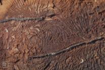 Merthyr Mawr: Invertebrate & Beetle