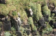 Llandudno: Plant/tree & Landscape
