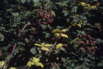 Wick: Plant/tree
