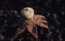 Gwent: Fungi