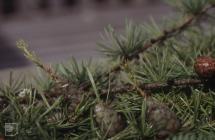 Newtown: Plant/tree