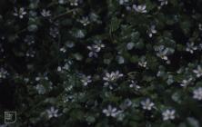 Maesteg: Plant/tree