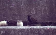 Gwaelod-y-Garth: Bird