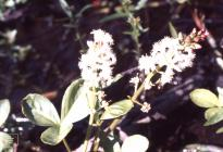 Hensol: Plant/tree