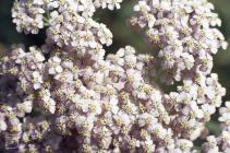 Tongwynlais: Plant/tree