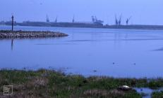 Ferry Road, Cardiff: Landscape & Bird