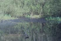Llanishen, Cardiff: Plant/tree & Water