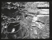 Spotted Flycatcher at nest