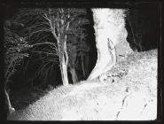 Ebw Valley Badgers