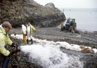 Washing crude oil off a Pembrokeshire beach...