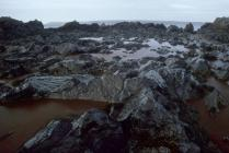 Rock pools full of crude oil at West Angle Bay