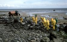 Cleaning oil off a Pembrokeshire Beach...