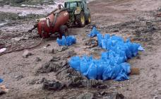 Clean up operation following the 1996  Sea...