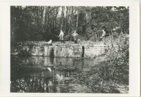 Spencer's House Pond, Llandough.