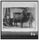 Horse and dram at Blaenavon Ironworks