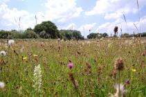 Meadow flowers at the National Botanic Gardens...