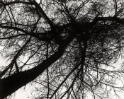 TREE, Cwmystwyth, Ceredigion 1994