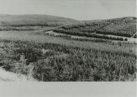 Established Plantation on Tywi (2)