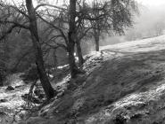 Cambria Wyn quarry. Ceinws/ Esgairgeiliog