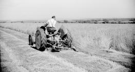 20 Ferguson mower, St. Clears,1952