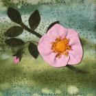 Dog Rose by Beryl Tallamy