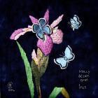 Stinking Iris, Brenda Caldicott