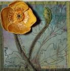 Welsh Poppy, Bronwen Wathan