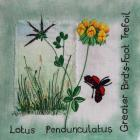 Greater Bird's-foot Trefoil, Alison...