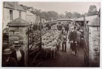 Cowbridge sheep market ca 1910