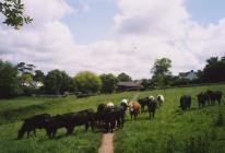 The 'Three Fields', Cowbridge  2000