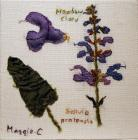 Meadow Clary by Maggie Cornelius