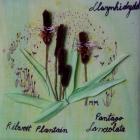 Llwynhidydd gan Margaret Morris