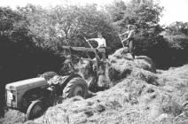 31 Unloading onto a silage pit, 1952