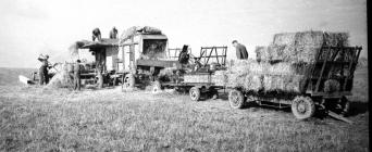 13 Threshing from mows
